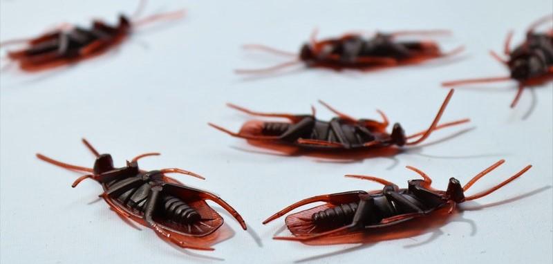Pest control dead bugs